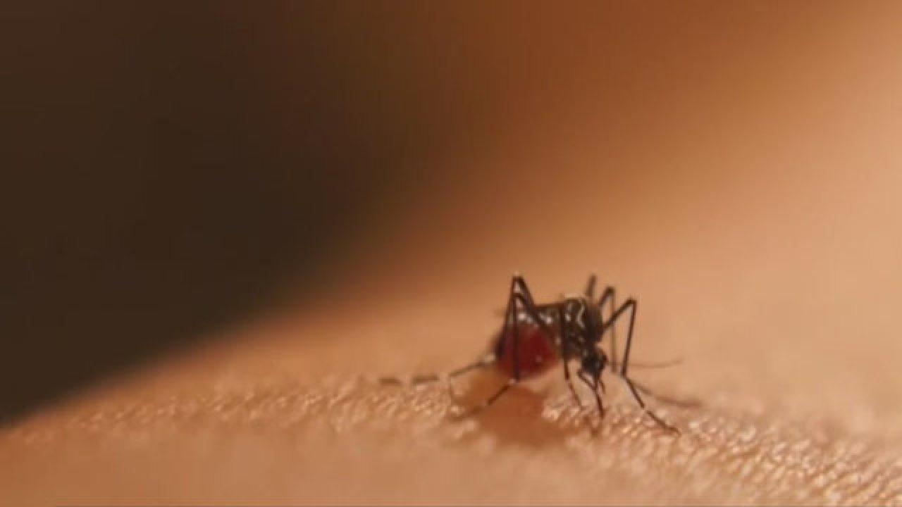 Mosquito Season Underway With A Vengeance